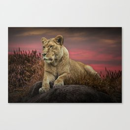 African Female Lion in the Grass at Sunset Canvas Print
