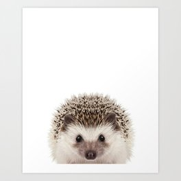 Baby Hedgehog Kunstdrucke