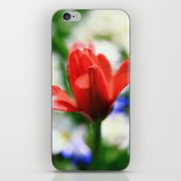 tulips iPhone & iPod Skins featuring tulips by Falko Follert Art-FF77