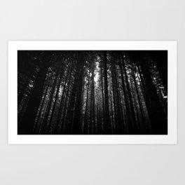 Norwegian woods - Bergen, Hordaland Art Print