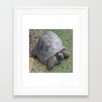 tortoise Framed Art Prints featuring tortoise by shannon's art space