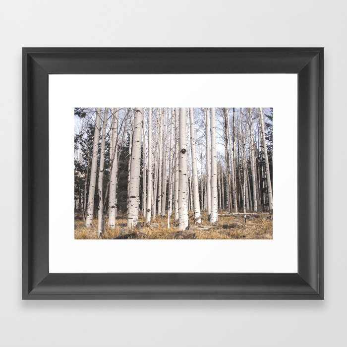 Trees of Reason - Birch Forest Gerahmter Kunstdruck