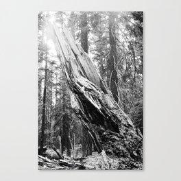 Torn Tree Canvas Print