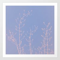 reassurance Art Prints featuring Serenity of Rose Jasmine by tanjica