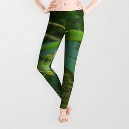 Frog Photography Print Leggings