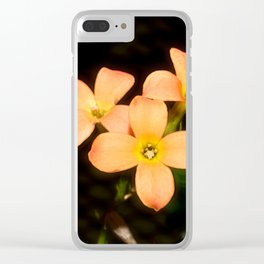 Kalanchoe Blossfeldiana 2 Clear iPhone Case