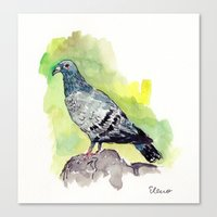 pigeon Canvas Prints featuring Pigeon by Elena Sandovici