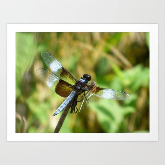 three winged dragonfly Art Print
