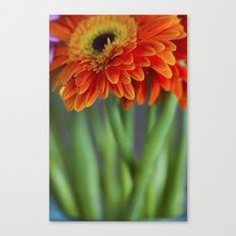 Macro photograph of orange gerbera daisies in a vase. Canvas Print