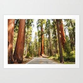 sequoia tree Art Print