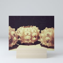 The Urchins Mini Art Print