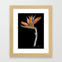 Bird of Paradise 01b Botanical Flower Framed Art Print