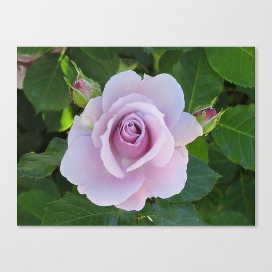 Bloom and Buds Paling to Purple Canvas Print