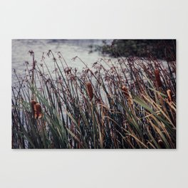 Cattails and pond photograph, Alaska Canvas Print