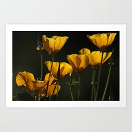 Yellow cups of sunshine Art Print