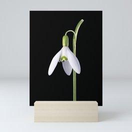 Solo Perfection Mini Art Print