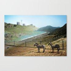 Seabras Canvas Print