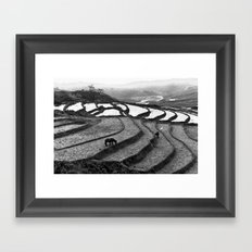 Horses on rice paddies in northern Vietnam Framed Art Print