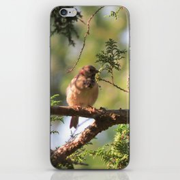 Sparrows Enjoy the Day iPhone Skin