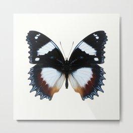 Madagascan Diadem Butterfly Metal Print
