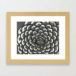 Cosmosis Pine Cone Framed Art Print