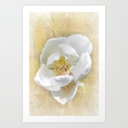 Sweet Southern Magnolia Art Print