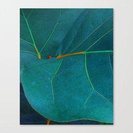 Two Sea Grape Leaves Canvas Print