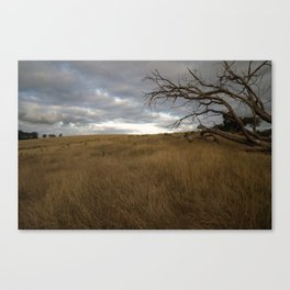 Dead tree in a Gippsland field Canvas Print