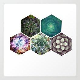 Succulent Geometry Art Print