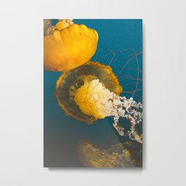 Pacific Sea Nettle Jellyfish II Metal Print