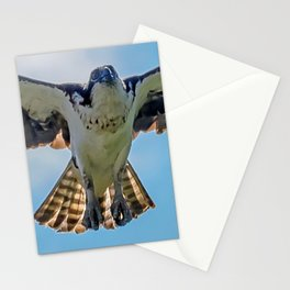 Nine Mile osprey IV Stationery Cards