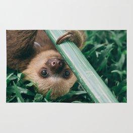 Baby Sloth Playing Rug