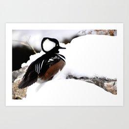 Duck in winter Art Print