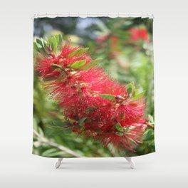 Calliandra Haematocephala Red Powderpuff  Shower Curtain