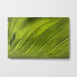 green leave Metal Print