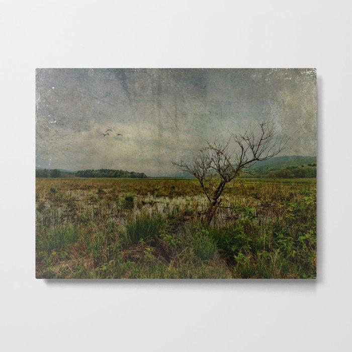 Heaven in Bashakill Wetlands Metal Print
