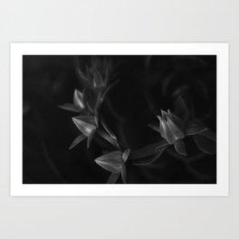 Petals   Flowers   Dark flowers   Gothic Decor   elegant goth Art Print
