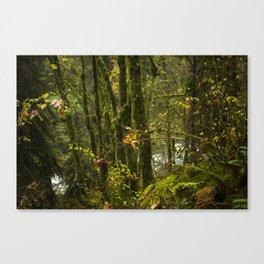 Portland Rainforest Canvas Print
