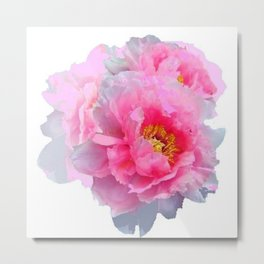 PINK & WHITE PEONY GARDEN FLOWER Metal Print