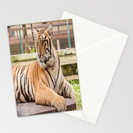 Post Playtime Rest, Indo-china Tiger Stationery Cards