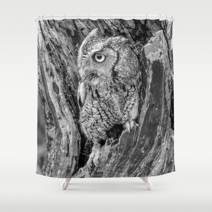 Echo the Screech Owl by Teresa Thompson Shower Curtain