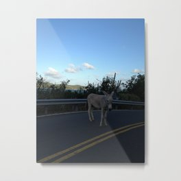 Jack ass, in the Road Metal Print