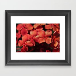 shiny flowers Framed Art Print