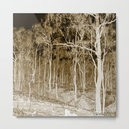 Forest trees at night Metal Print