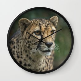 Cheetah's Face Wall Clock