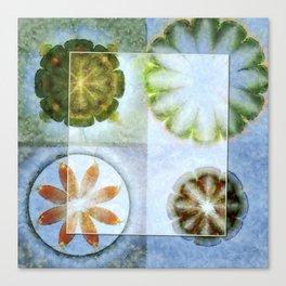 Lignin Spacing Flowers  ID:16165-040505-07411 Canvas Print