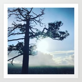 Oregon tree Art Print