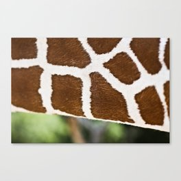 Paths of Life Canvas Print