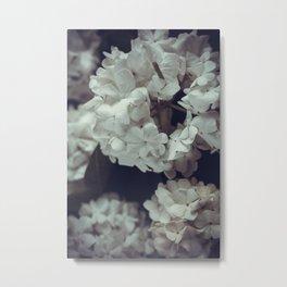 White lilac Metal Print