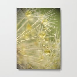 Dandelion Water Drop Macro 13 Metal Print